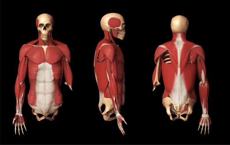 حدنصاب و تراز قبولی دعوت به مصاحبه آزمون دکتری آناتومی و جنین شناسی مقایسه ای دانشگاه آزاد