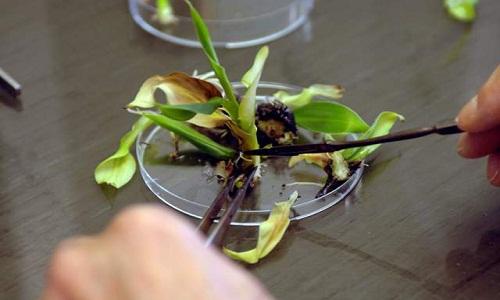 منابع کنکور کارشناسی ارشد زراعت و اصلاح نباتات