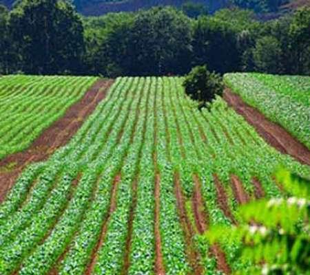 آخرین رتبه قبولی رشته مهندسی کشاورزی انتخاب رشته دانشگاه آزاد 94