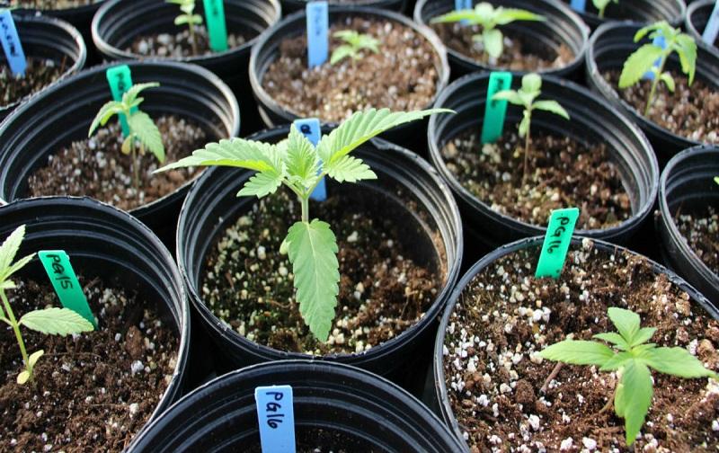حدنصاب و تراز قبولی دعوت به مصاحبه آزمون دکتری ژنتیک و به نژادی گیاهی