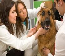 حدنصاب و تراز قبولی دعوت به مصاحبه آزمون دکتری علوم جانوری تکوینی