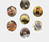 رتبه و کارنامه محل قبولی ارشد زیست شناسی جانوری