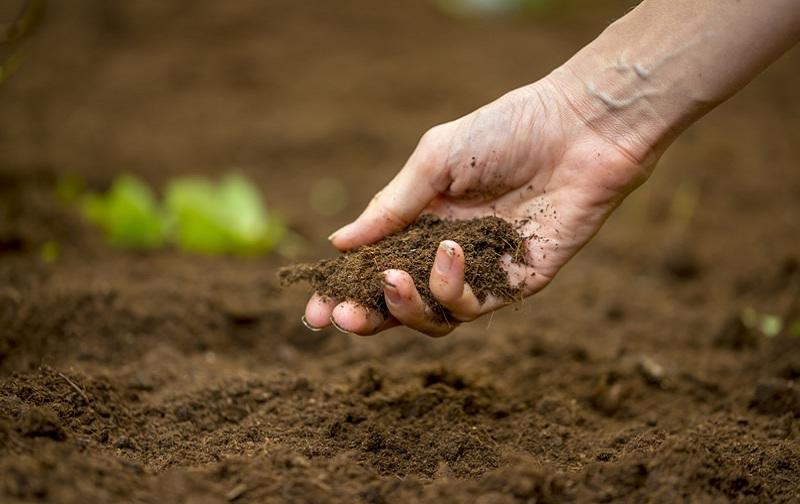 حدنصاب و تراز قبولی دعوت به مصاحبه آزمون دکتری مدیریت حاصلخیزی و زیست فناوری خاک