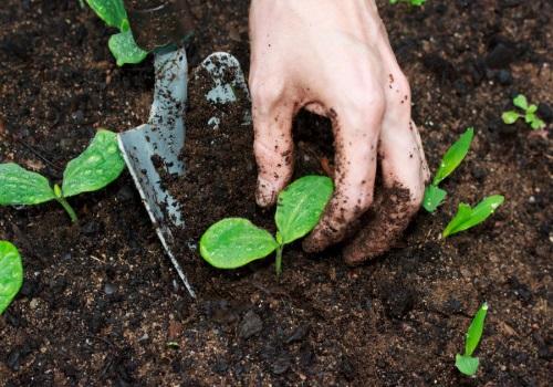 منابع کنکور کارشناسی ارشد مدیریت حاصلخیزی زیست فناوری و منابع خاک