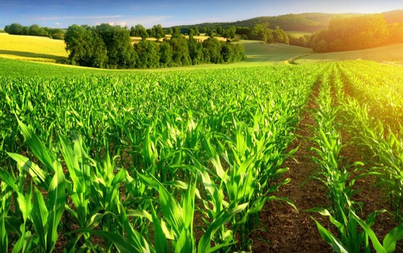 حدنصاب و تراز قبولی دعوت به مصاحبه آزمون دکتری زراعت