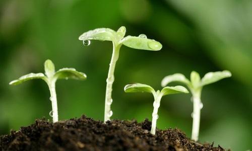 منابع آزمون دکتری زیست شناسی سیستماتیک و بوم شناسی گیاهی