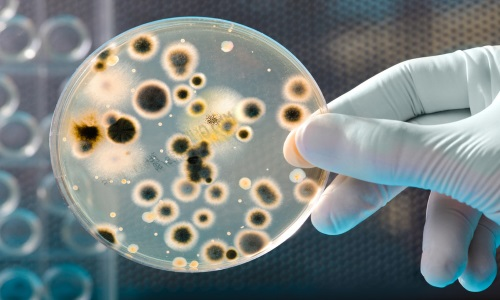 منابع آزمون دکتری زیست فناوری میکروبی