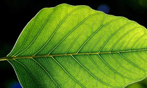 منابع آزمون دکتری زیست شناسی فیزیولوژی گیاهی